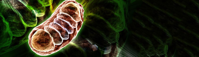 Mitochondriale Medizin Bergmueller
